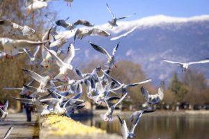allontanamento volatili sp solution palermo disinfestazione catania sicilia reti dissuasori uccelli