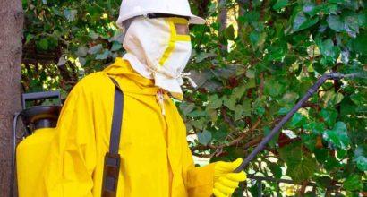 disinfestazione palermo ragni zanzare zecche pulci pronto intervento 24 sp solution palermo sicilia catania trapani