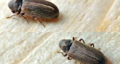 trattamento antitarli termiti antitarli ed acari del legno palermo sp solution palermo 2