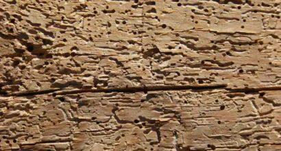 trattamento antitarli termiti antitarli ed acari del legno palermo sp solution palermo
